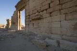Palmyra apr 2009 0115.jpg