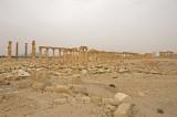 Palmyra apr 2009 0174.jpg