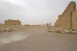 Palmyra apr 2009 0195.jpg