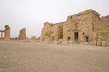 Palmyra apr 2009 0196.jpg