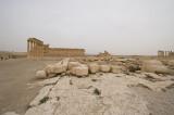 Palmyra apr 2009 0202.jpg