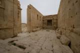 Palmyra apr 2009 0274.jpg