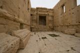 Palmyra apr 2009 0275.jpg