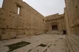 Palmyra apr 2009 0276.jpg