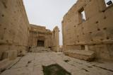 Palmyra apr 2009 0278.jpg