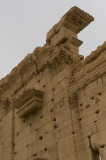 Palmyra apr 2009 0290.jpg