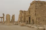 Palmyra apr 2009 0297.jpg