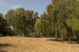 Amrit sept 2009 3379.jpg