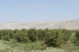 Ain Dara 2010 0495.jpg