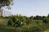 Tartus 2010 0642.jpg