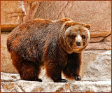 bear6757.jpg
