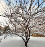 Snow Tree Sunset