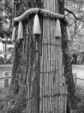 Akasaka Hikawa Shrine V