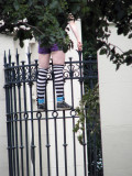She was singing and dancing on the fence...