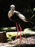 Bird watching in Brisbane, Australia