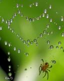 Une araignée amoureuse...Je suppose :)