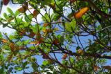 Punta Cana0001_19.JPG