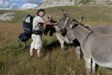 Polochon s'improvise dompteur d'ânes