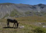 L'est pas beau mon âne ?