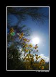 Anza Borrego Desert Wild Flowers