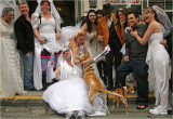 Brides Of March-Who let the dogs out?
