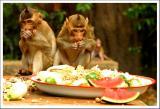 hungry monkeys