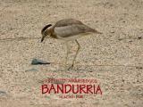 Bandurria Project