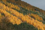 Autumn Slovakia66.jpg
