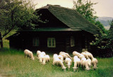 Wallachian Village in Rožnov pod Radhoštěm,Czech Republic