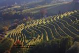 Vineyards in Slovenia