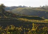 vineyard in Slovenia2