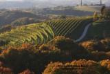 vineyard in Slovenia3