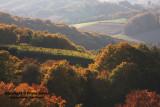 vineyard in Slovenia1