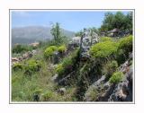 Karst vegetation