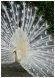 Parrot_Madeira1.jpg