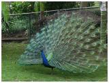 Parrot_Madeira12.jpg