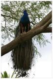 Parrot_Madeira18.jpg