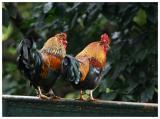 Parrot_Madeira28.jpg
