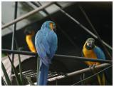 Parrot_Madeira45.jpg