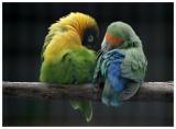 Parrot_Madeira5.jpg
