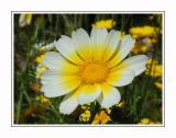 Flower,macroshot