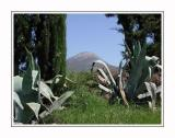 Agaves everywhere