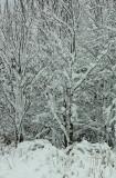 Zimmerman Road Snow