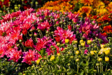 Late Summer Flower Sale
