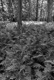 Ferns On The Floor