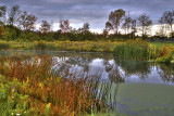 Autumn At Knox Equestrian Pond