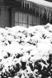 More Snow in Buffalo