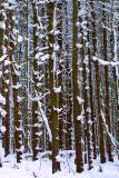 Erie County Forest