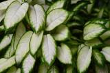 Go Green Go White