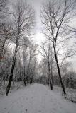 Winter Aley